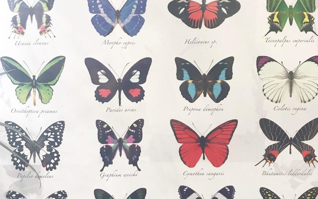 Vienna: The Butterfly Garden/Schmetterling Haus
